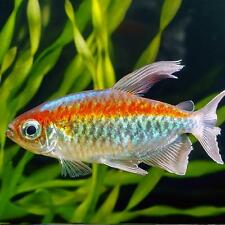 Tropical fish for sale for Live fish for sale