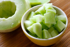 Honeydew Melon Fragrance Oil Candle / Soap Making / Crafting - U Pick Size