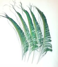 Peacock Sword Feathers 12 inches Iridescent Green Colour . UK Stock