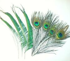 Mixed Peacock Eye Feathers and Peacock Sword Feathers - 10-12 inches