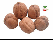 New Year Offer Price 1Kg Sale Walnuts in Shell - Premium Quality HerbsnSpiceit