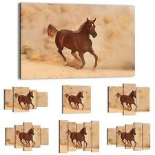 Canvas Print Framed Picture 47 Shapes Wall Art animals horse landscape 2453 UA