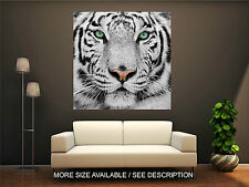 Wall Art Canvas Print  Picture White Tiger Wild Animal-Unframed