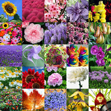 Multifarious Ornamental Grow up Flower & Plants Seeds Garden For View Decorate