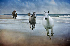 Beach Horses Wall Art - Ready To Hang Large Framed Canvas Print - Photo Picture