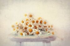 White Daisies Painting Print on Wrapped Canvas -Wall Art Home Decor