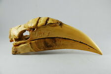 Female Wreathed Hornbill Skull Replica Skeleton Model Collectible Bird Taxidermy