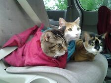 Cat-in-the-bag Cozy Comfort Carrier - The Best Cat Carrier!