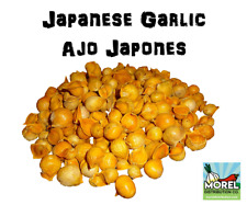 Japanese Garlic --- Ajo Japones (30-60-130) Count Per Bag //100% Natural!!!//