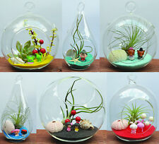 Terrarium Hanging Glass ONLY Heart Ord Global Air plant Succulent Tillandsia NEW