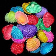 "Dyed Cardita Clam Ark Craft Shells ~ (30+ pcs.) 1-1/2""-2"" Seashells per 1/2 lb."