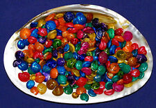 "Dyed Umbonium Craft Seashells ~ (1000 pcs.) 1/4""-1/2"" Shells per 1/2 lb."