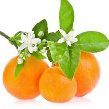 10ml Sweet Orange Essential Oil - 100% Pure & Natural Aromatherapy Grade Oils