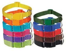Zack & Zoey Nylon Dog Pet Collars  LOTS OF COLORS 4 Size Choices
