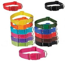 Bright Nylon Dog Collar Pet Puppy Collars Zack Zoey Adjustable Collar Leash Lead