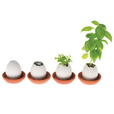 Eggling Grow Plant  Hand Made Egg Hatches Plant