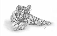 TIGER cub LE art drawing prints  2 sizes A4/A3 &  Card Available