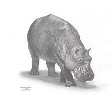 HIPPO Hippopotamus Ltd Edit art drawing prints 2 sizes A4/A3 & Card Available