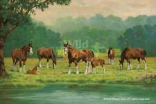 Chris Cummings Pastoral - Clydesdales Remarque