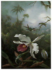 1215.Orchid and Hummingbird Art Decor POSTER.Graphics to decorate home office.