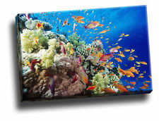 Coral Reef, Southern Red Sea, Near Safaga, Egypt Giclee Canvas Wall Art Picture