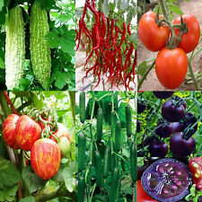 Heirloom Vegetable Fruits Seed Garden Plant  NON GMO / Hybrid Organic Plant Seed