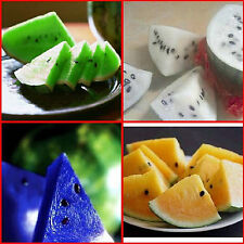10pcs Seeds Watermelon Fruit Plant Seeds Home Garden Seeds Garden Fruit Plant