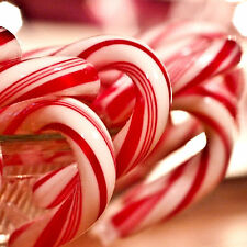 CANDY CANE Bath Body & Massage Oil EXTRA STRONG TRIPLE SCENTED