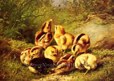 Baby Chicks ~ Poultry, Birds, Chickens ~ Counted Cross Stitch Pattern