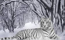 """Tiger white in snow forest Beautiful XL CANVAS PRINT 24""""X 36"""" poster cat"""