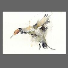 JEN BUCKLEY signed LIMITED EDITON PRINT of original pintail DUCK watercolour