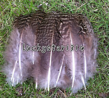 New 10-500pcs natural 10-15cm/4-6inches pheasant feathers free shipping select