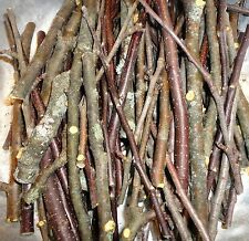 PHOENIX FARM GNAWERS Organic FRESH Wood Chew Stick SAMPLES Apple Pear Blueberry