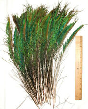 "50 Peacock Sword Feathers Green Irridecent L or R side 12-20"" length"