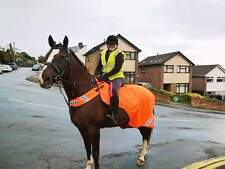 GEE TAC HORSE REFLECTIVE EXERCISE RIDE ON FLY RUG SHEET WRAP ROUND ALL SIZES