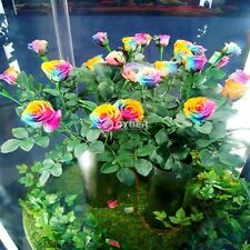 Lots Multi-color Rare Rainbow Rose Flower Seeds Your Lover Home Garden Plants DZ