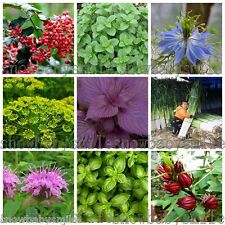 52 Variety Herb Seeds Garden Aromatic Plant Vegetable Medicinal Heirloom ORGANIC
