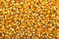 Popping Corn Popcorn Seeds Kernels Top Cinema Quality  1.2.4.8KG