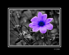 """Double MATTED Photograph """"Purple Flower"""" 8x10 to 16x20 Wall Art Silver Metallic"""