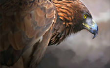 Home Art wall Decor bird Animal Eagle oil painting picture Printed on Canvas 703