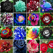 COLORFUL ROSE Flower Seed Ideal Garden Heirloom Potted HOME Plant Ornamental NEW