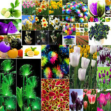Fruit Various Ideal Home Garden Potted Seed Rare Perfume Flower Plant Seeds HOT