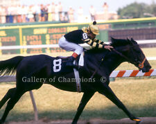 "Seattle Slew 1977 Preakness Stakes Photo 8"" x 10 - 24"" x 30"""