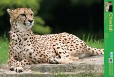 New The Cheetah Wild Facts Mini Poster