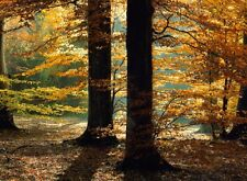 trees in the forest fall time scenery Home room decor poster PERSONALIZED FREE