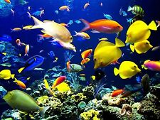 Fish Tropical Bathroom Poster Wall Art Home Decor New Art PERSONALIZE FREE