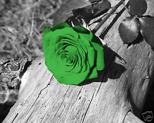 Green Wall Art / Rose Flower/Floral Interior Home Decor Matted Picture