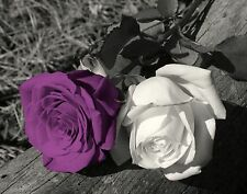 Black White Purple Rose Flower Creative Photography Wal Art Decor Picture