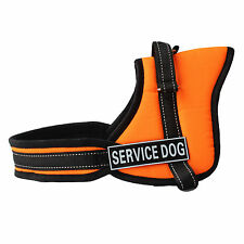 Orange Service Dog Harness Vest Removable label Patches IN TRAINING THERAPY DOG
