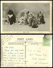 3 Cats Kittens, Family Pets, Basket Flowers 1907 Old Real Photo Postcard Animals